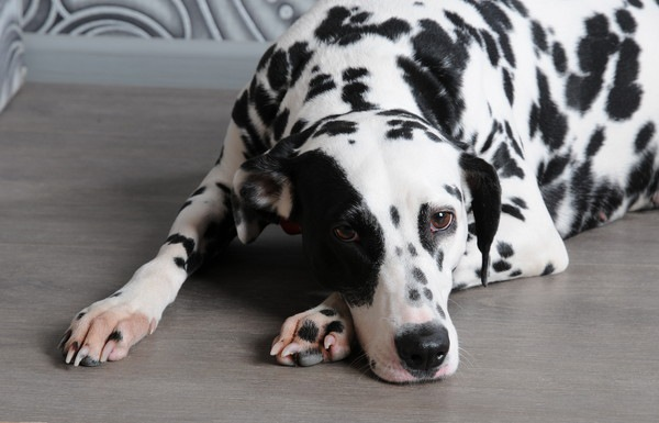 犬が朝に吐く原因について 病気の可能性から対処法まで