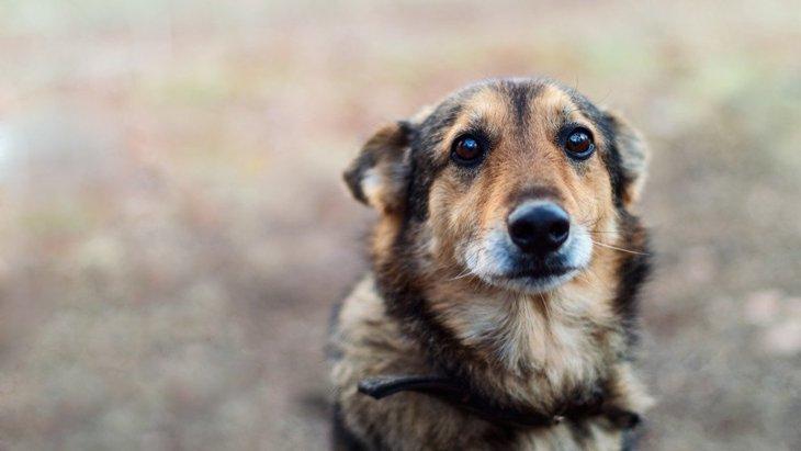 犬が『不幸』を感じている時にする仕草や態度5選