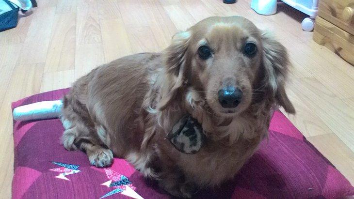 犬が自分のしっぽを噛む原因と対処法