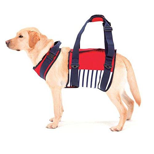 老犬の介護用ハーネス活用法!歩行をしっかりサポート