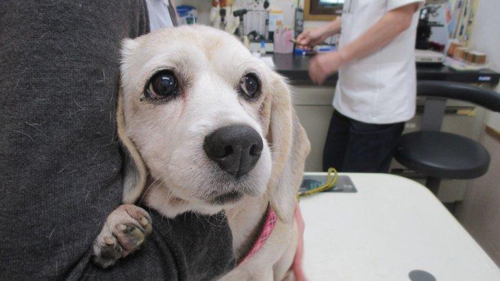 センターへの持ち込まれる『高齢飼い主の入院や死亡』で取り残された犬達
