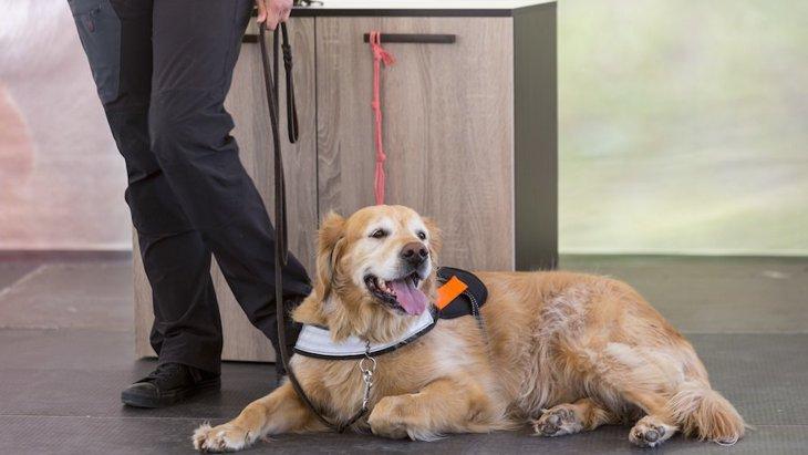 犬はてんかん発作を事前に匂いで感知できるという研究結果