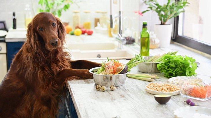 ダイエット中の犬に!低カロリーで安全な食材6つ