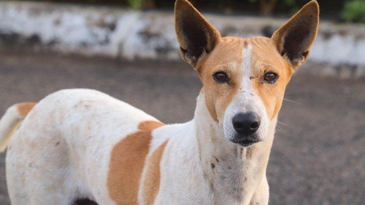 インドの野良犬研究〜犬が群れやグループで暮らす意味