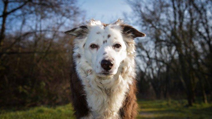 犬の性格特性は年齢と共にどのように変化するかという実験とリサーチ