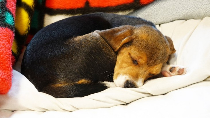 犬が寝る前にくるくる回る3つの心理