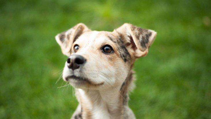 野良犬のいない国と認定されているオランダ、この国が取った対策とは?