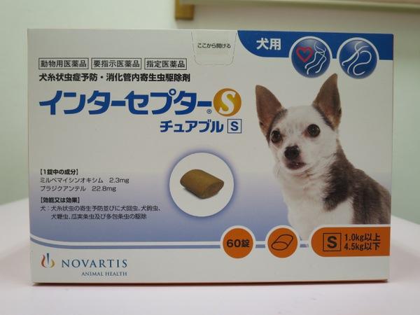 内部寄生虫予防&フィラリア予防薬インターセプター。獣医師おすすめ!