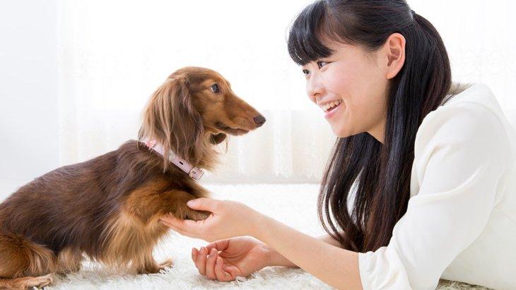 犬が床をひっかく理由と対処法
