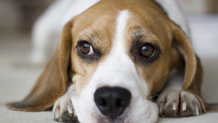 犬がウンチを食べてしまう心理3選!どうやって対処するのが正しい?