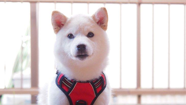 柴犬や秋田犬にありがち?日本犬に共通している6つのこと