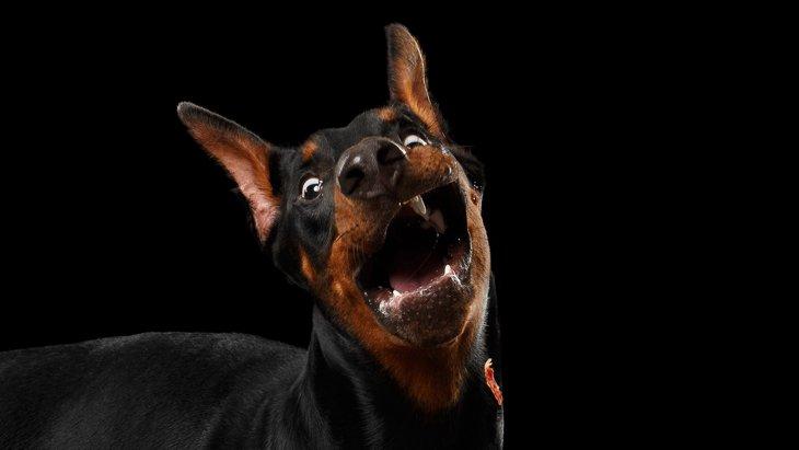 慌てないで!突然パニックになった愛犬をしずめる方法