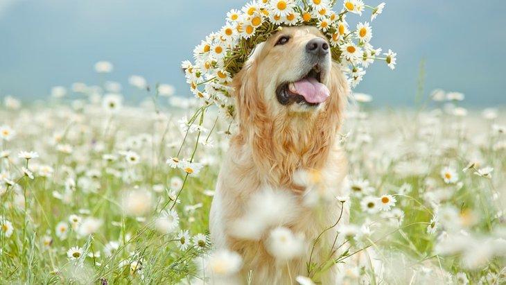 愛犬の様々な心のストレスにフラワーエッセンスはいかが?