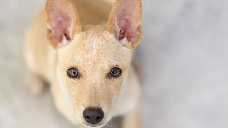 犬はどうやって飼い主を認識しているの?ニオイだけではありません。