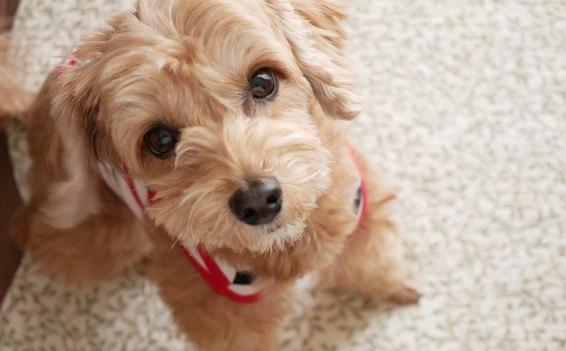 犬が毎日考えている『密かな願望』4つ