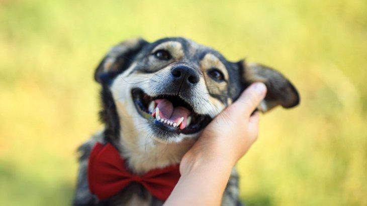 犬は『目』で心理がわかる!4つの気持ちと注意すべき症状