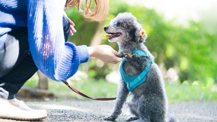 犬はどうして飼い主の言うことを聞くの?