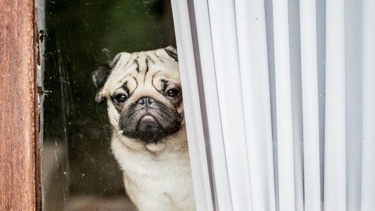 犬が『飼い主と離れたくない』と思っている時の仕草や行動4選