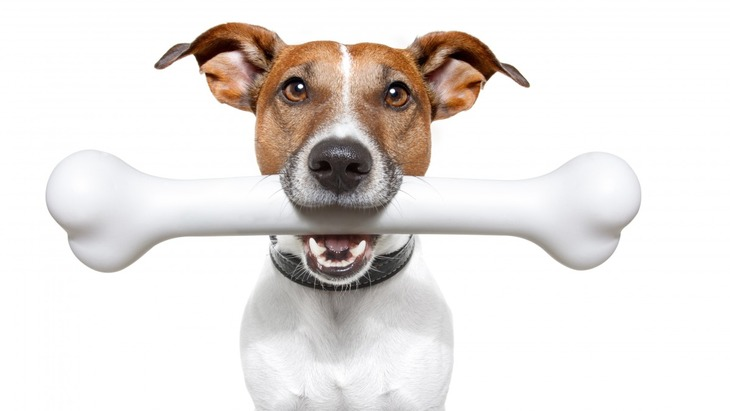 犬に鳥の骨は危険!もし食べてしまったらどうなるの?