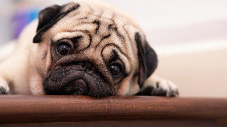 犬のストレスに繋がってしまう『意外な行動』3選