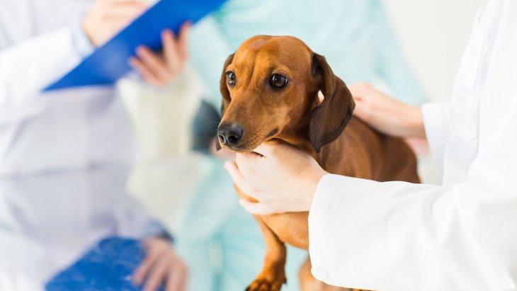 犬のIBD(炎症性腸疾患)について