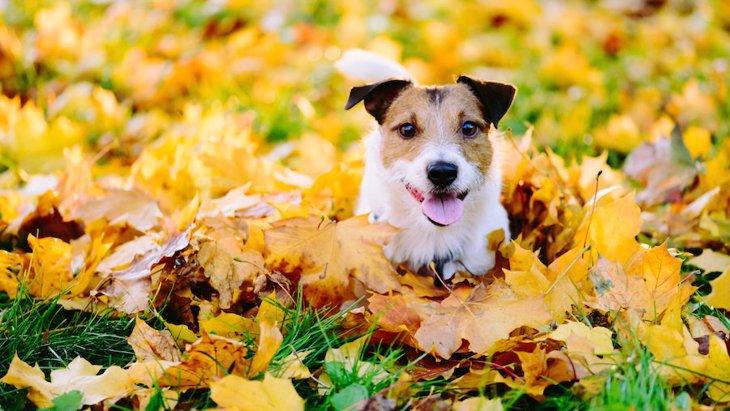 犬が干し柿を食べるのは大丈夫?注意点や柿との違いなど