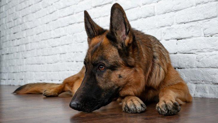 犬にとってストレスな『絶対NG行為』7選