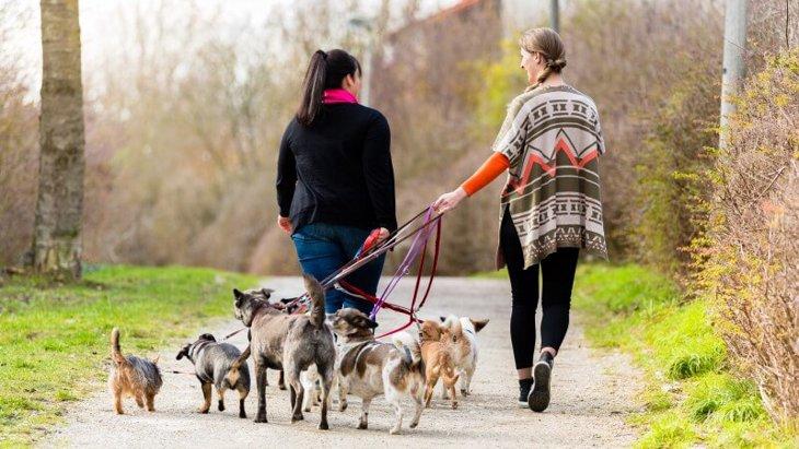 犬の散歩代行アルバイトはわんこ好きにはたまらないお仕事!