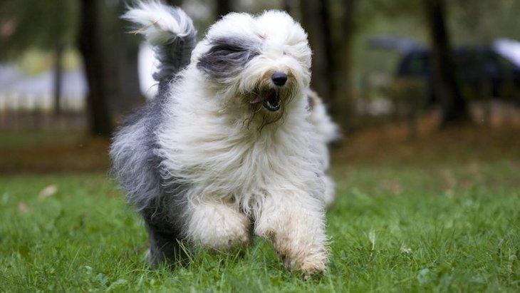 犬の前髪は長いまま放置してても大丈夫?