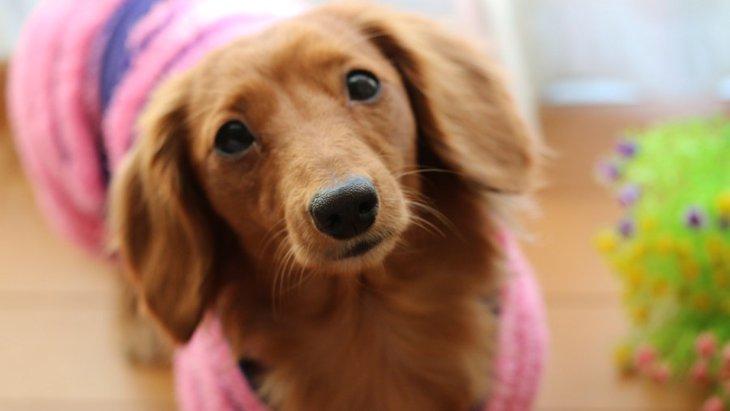清潔に保とう!犬用品にメンテナンスが必要な理由と方法