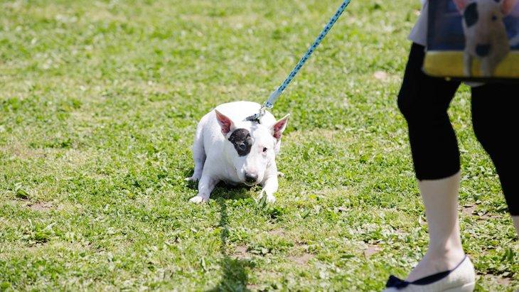 犬にするべきではない「無理やり行為」5選