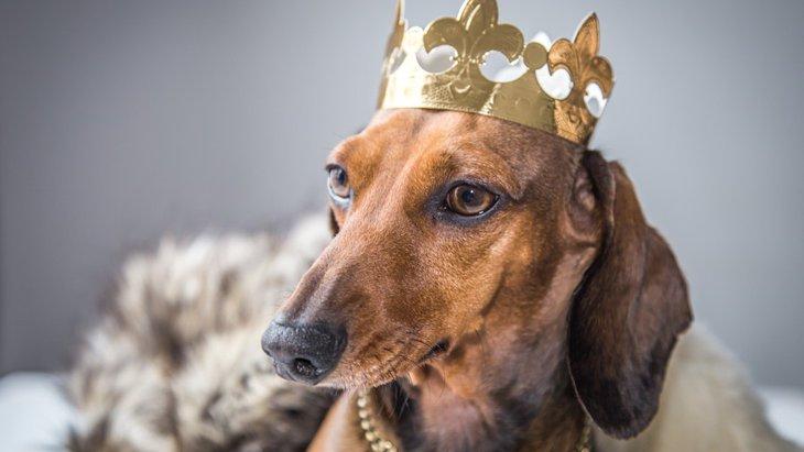 犬を甘やかしすぎてる飼い主の特徴4つ