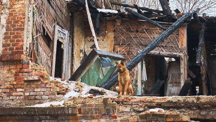 備えあれば憂い無し!愛犬を守るための災害の準備6つ