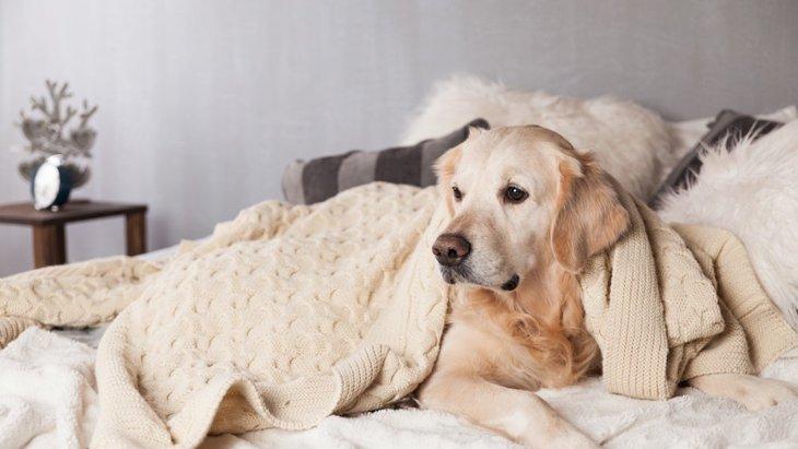犬がいつも同じ場所にいる心理5つ