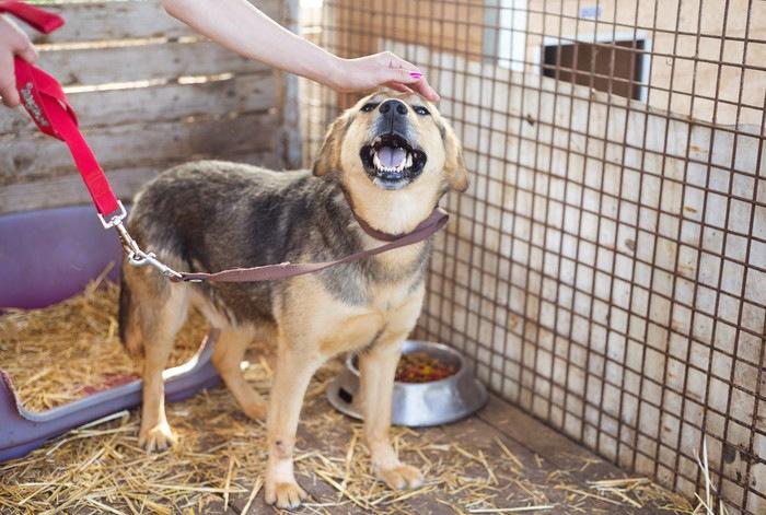 捨て犬の引き取り方について