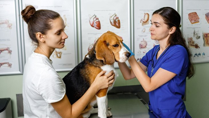 絶対に守って!『動物病院で必ず意識すべきルール』3選