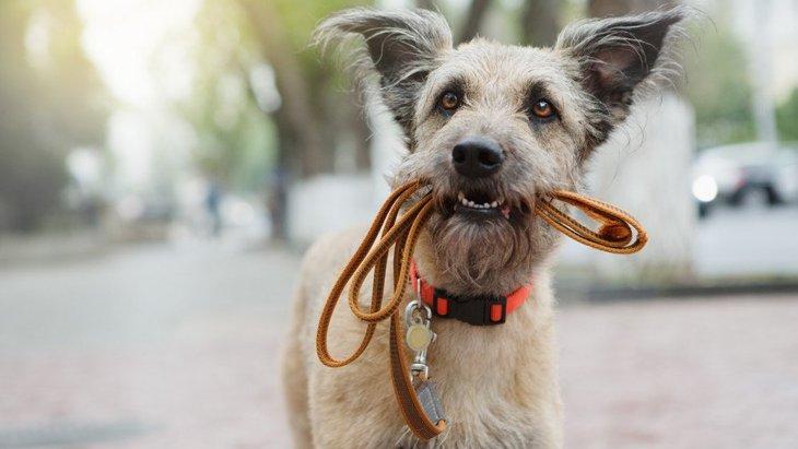 犬が散歩中に吠える理由とやめさせるしつけ方法