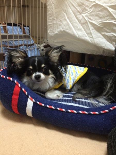 犬用ベッドって必要なの?選び方のコツからおすすめ商品の評価・口コミまで