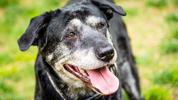 犬の行動に現れる『老化現象』5選!いつもの生活から改善すべきところは?