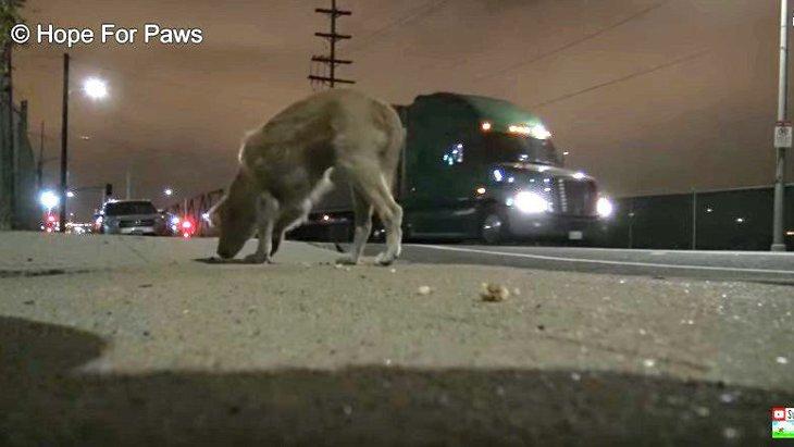 トラック行き交う幹線道路脇での野良犬保護。安全に捕獲できるのか?