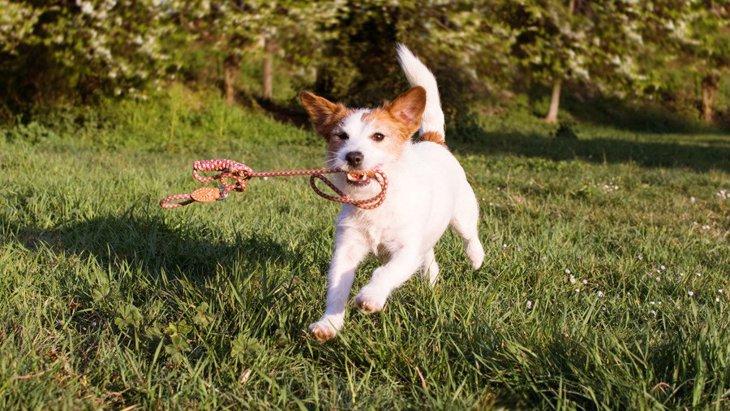 犬が散歩中に突然に走り出す時の心理5つ