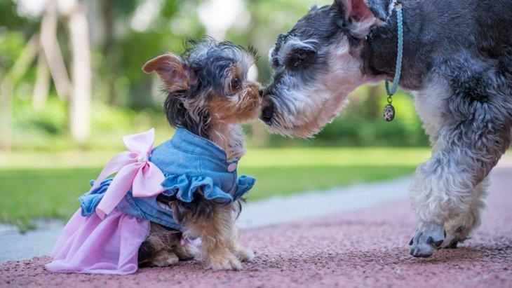 犬に洋服を着せるべき5つのシチュエーション