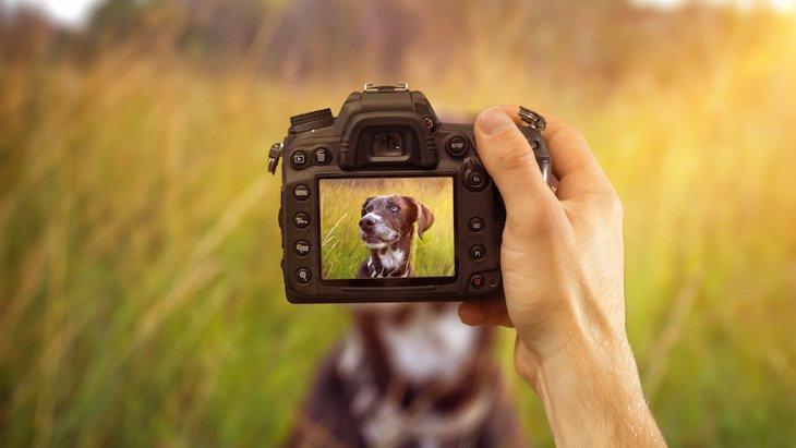 犬はカメラが苦手?「写真嫌い」なのは自分の犬だけなの?