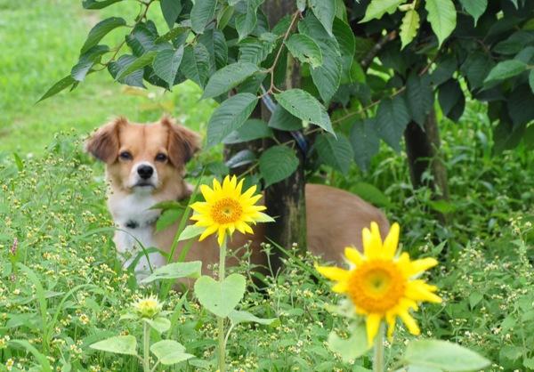 犬の死亡届提出の手続き方法と返却するものなどについて