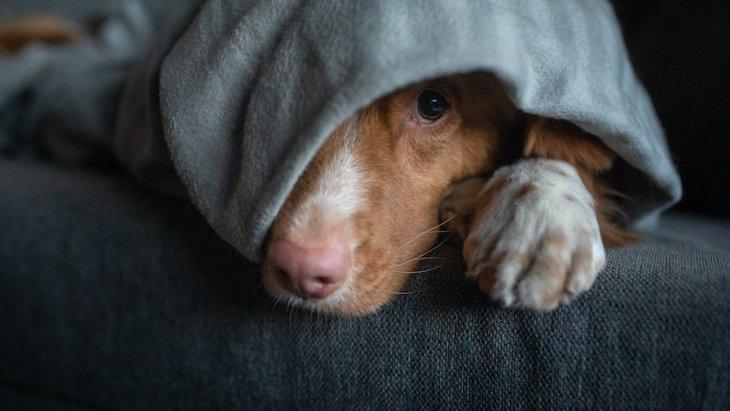 犬が地震前に見せる異常な行動4つ
