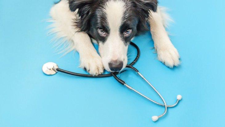犬が病院を嫌がる…スムーズに連れて行く7つの方法!おやつで釣るのはNG?
