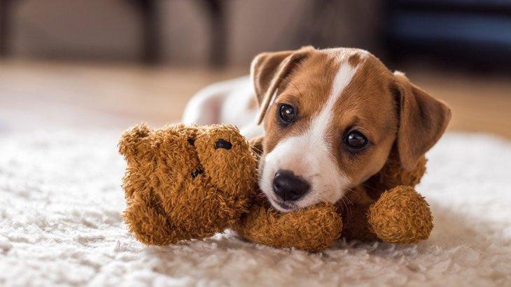 犬に渡すべきではない『おもちゃ』の特徴3選!危険な理由と安全なおもちゃを解説