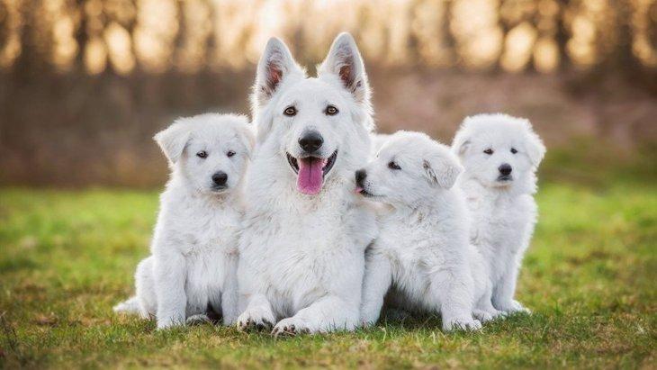 顔がカッコいい『イケメン犬種』3選♡飼い方のコツや注意点は?