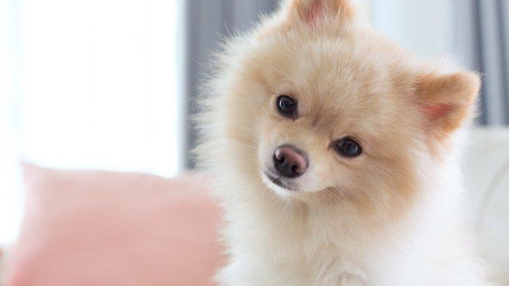 犬の五感は人間とどう違うの?