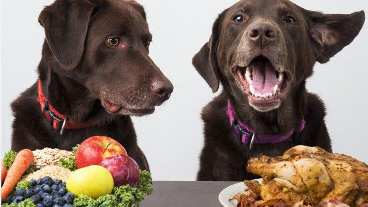 犬は好奇心旺盛!他のペットのごはんを横取りしちゃう理由って?